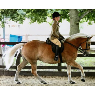 Stanly-the-Haflinger---Insta