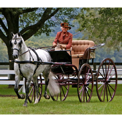 Vicki-Nelson-Bodoh-Snowdrop-to-an-Antique-Wicker-Phaeton-by-A.-T.-Demarest-Co.