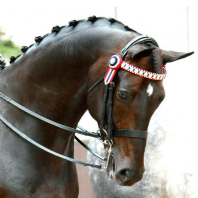 english-bridles-showing