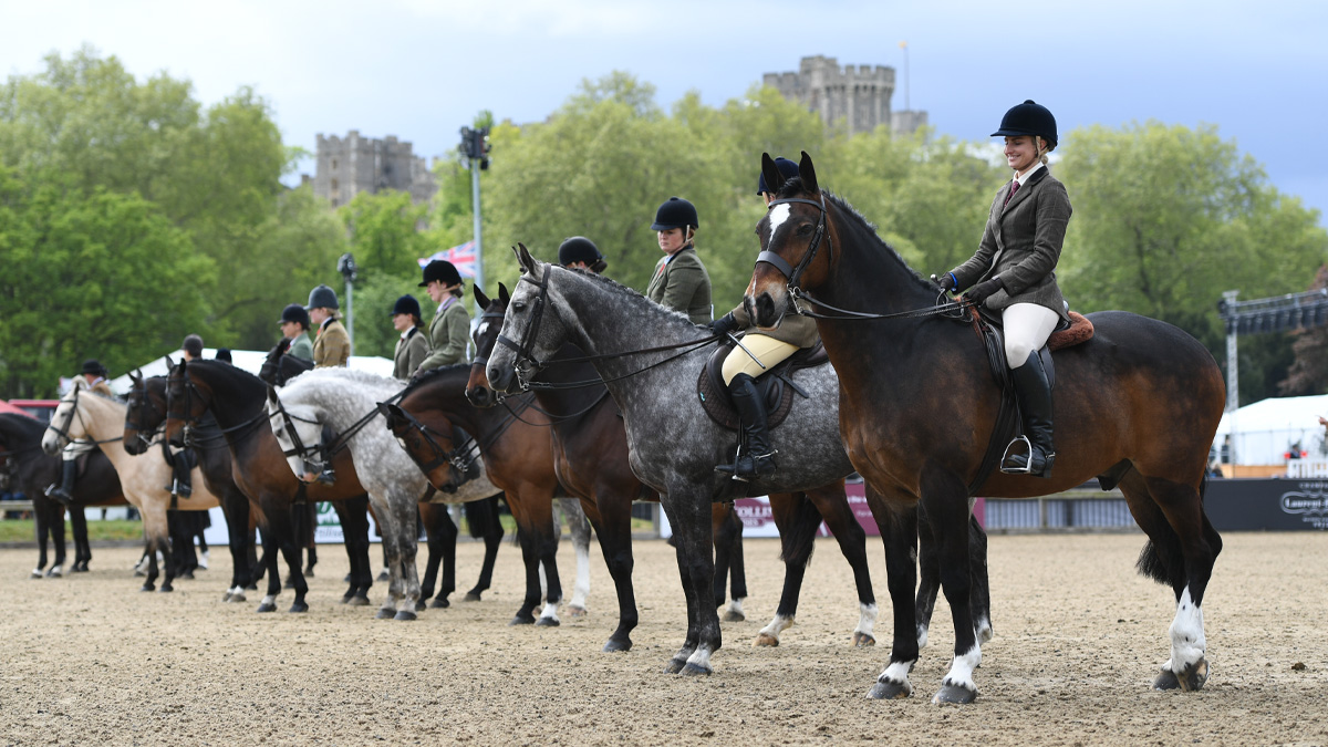 entries-update-show-horses